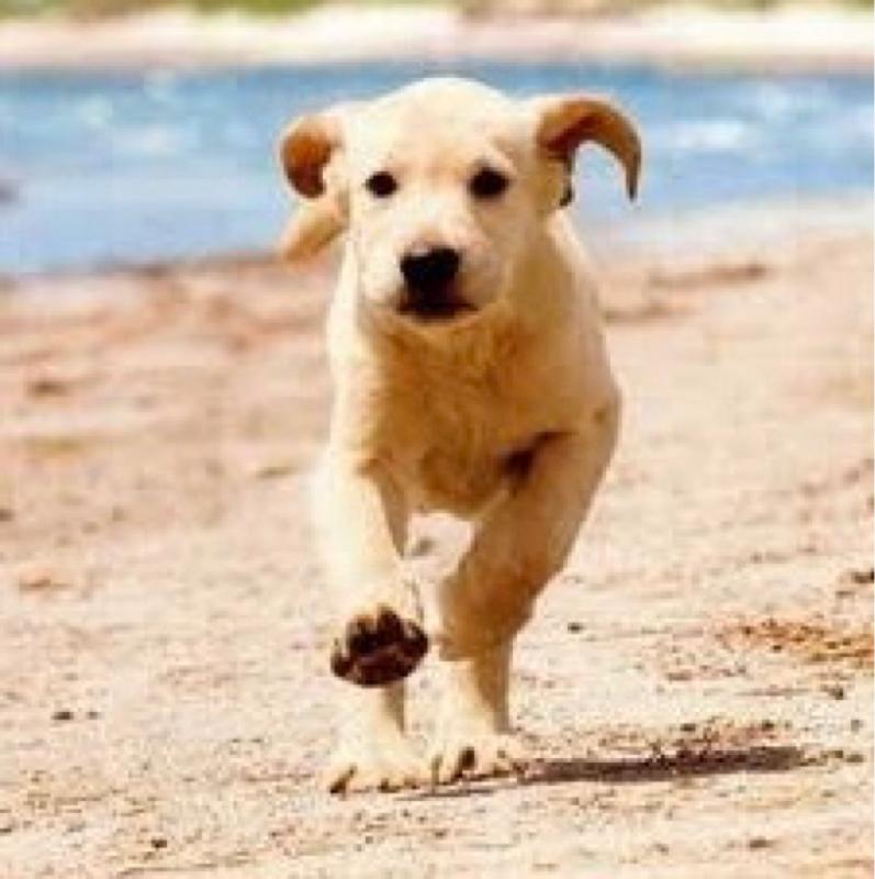 #15 【オススメ映画】マーリー&ミー 世界一おバカな犬が教えてくれたこと