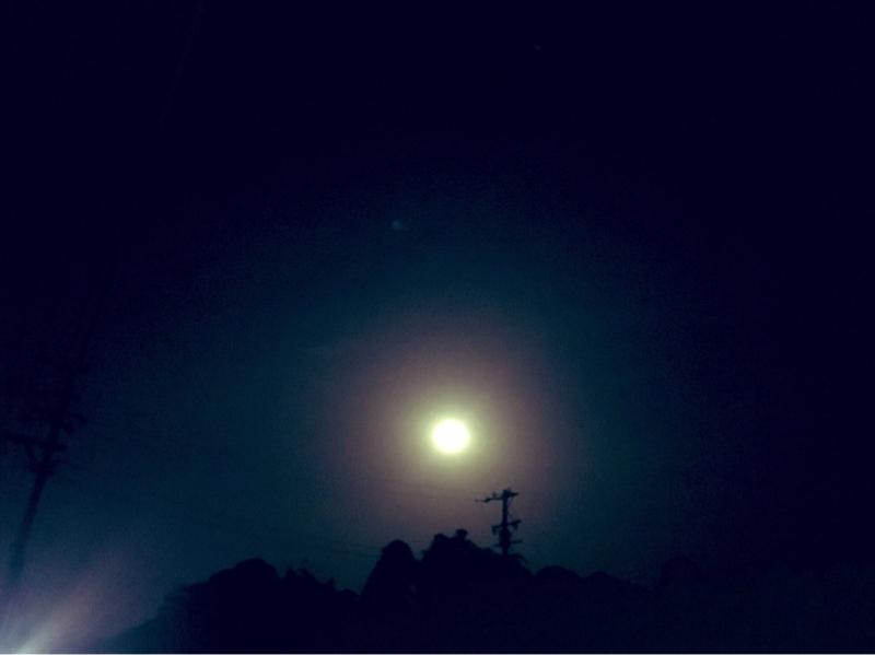 感情の毒出し祭り。プリミさんの遠隔宇宙マッサージ。フラワーエッセンス。突然寂しさが襲ってきた理由。