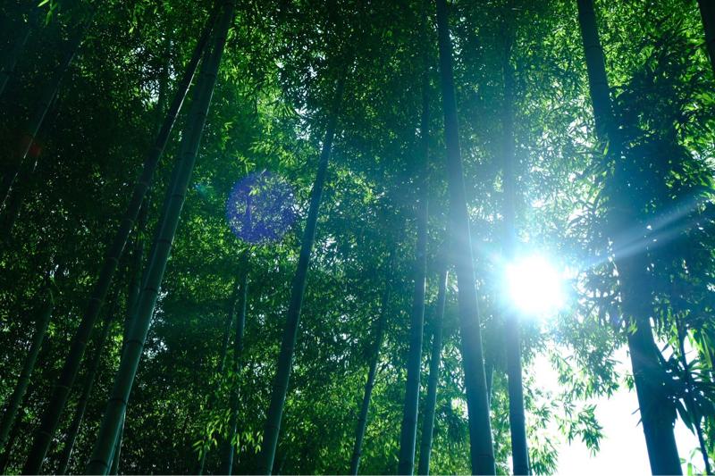 vol.69 🗻静岡旅行✩その3【宙SORA〜竹林〜蜂蜜🐝⋆︎*゚∗🍯】