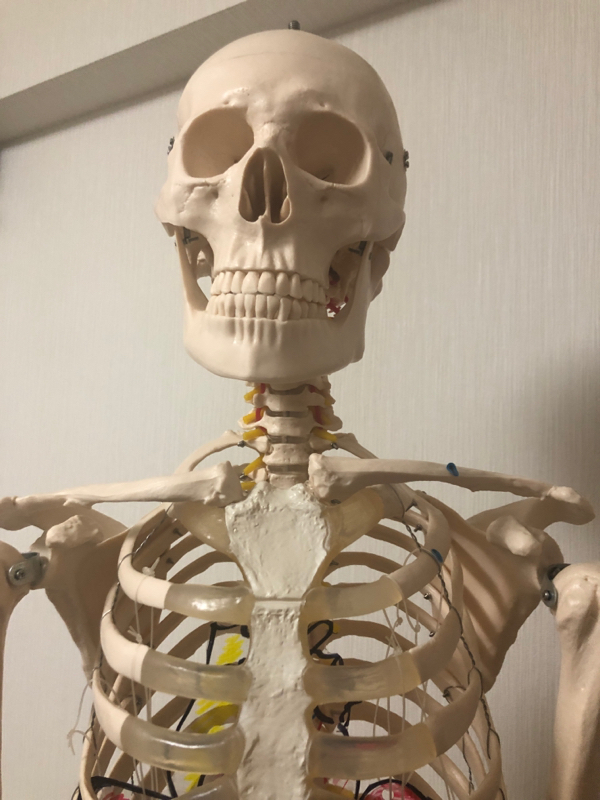 きゅあラジ第四回【どうして身体は歪むのか?】