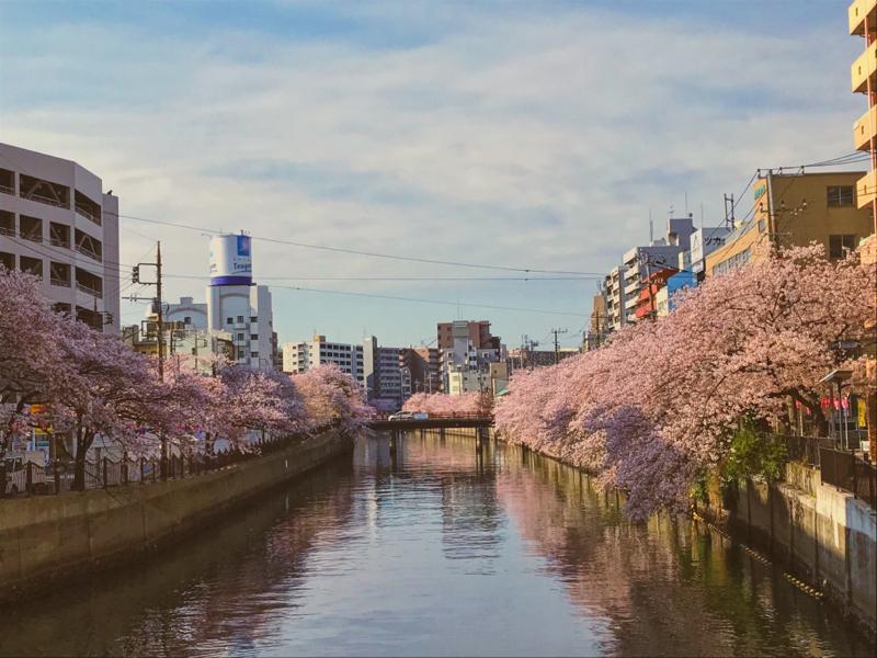 朗読『桜の樹の下には』