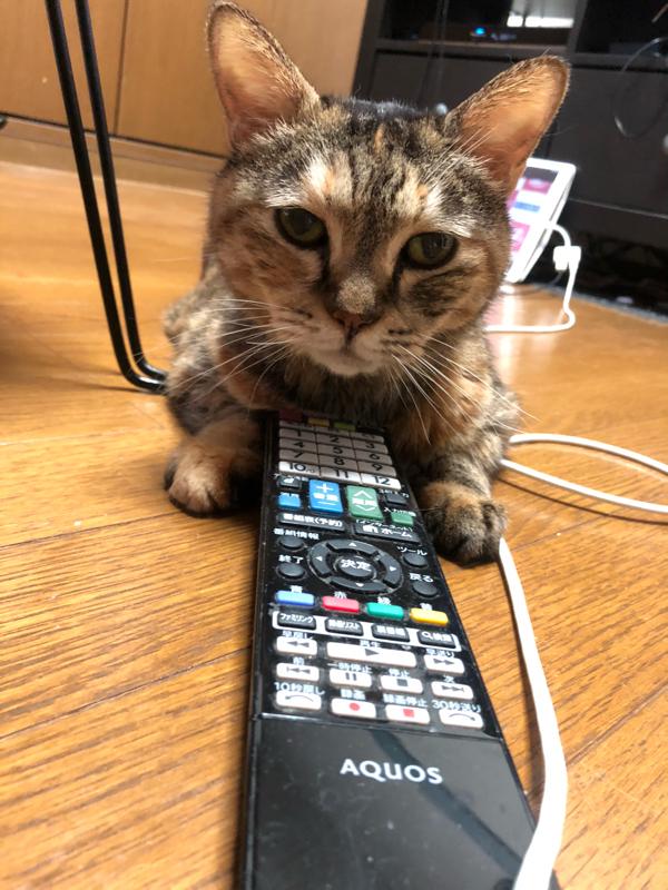 飼い猫インタビュー〜新しいエサ皿編〜