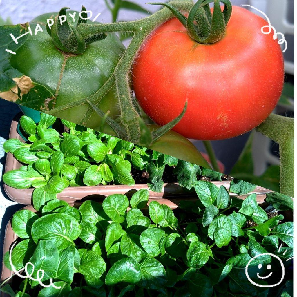 #5 「家庭菜園」のWikipedia