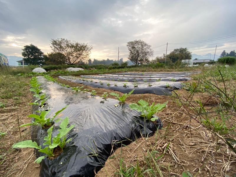 農業作り革命の予感 #142