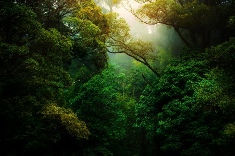 自然は人間になれる #334