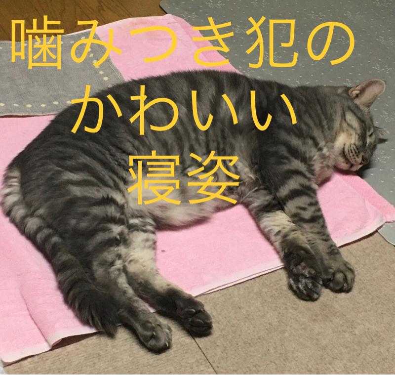 【思い出し第十五話】飼い猫にも野生