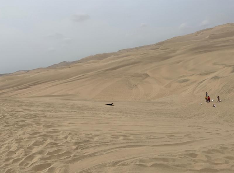 砂漠を直行落下のサンドボードinペルー