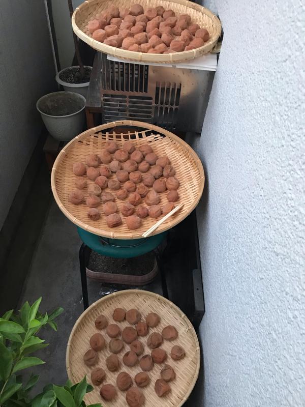 梅 土用干し 3日目!!!