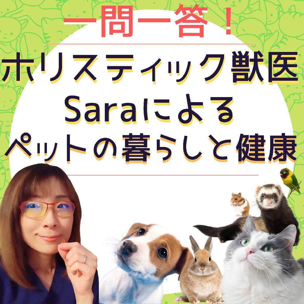 一問一答!ホリスティック獣医Saraによるペットの暮らしと健康
