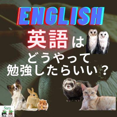 #17. イギリスからお届け!英語はどうやって勉強したらいいですか?