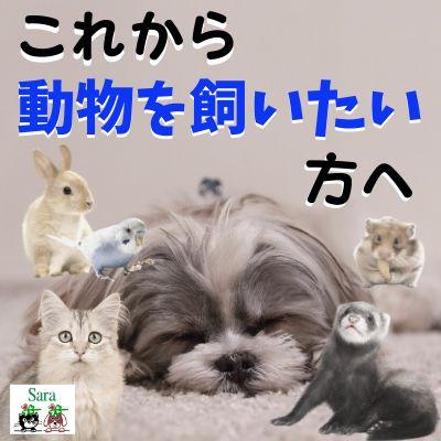 #31.  ペットを飼うことで失うものと得られるもの:これから飼いたいと思っている方へ