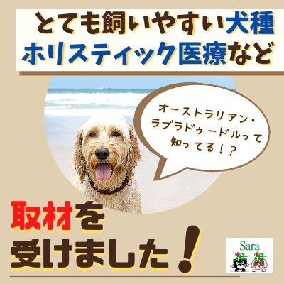 #55. 取材を受けました!最も飼いやすい犬種って?