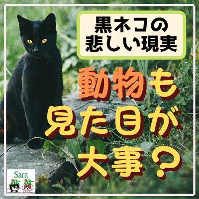 #58. 動物も見た目が大事?黒猫がもらわれない悲しい理由