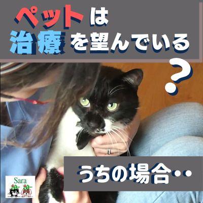 #66. ペットは治療を望んでいる?うちの猫ジョバンニの場合・・