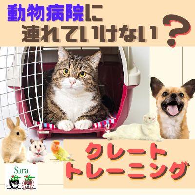#70. クレートトレーニング:動物病院につれていけない?まずはキャリーバッグに慣れてもらおう