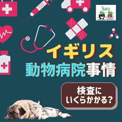 #82. イギリスの動物病院事情:血液検査 & エコーで〇〇万円