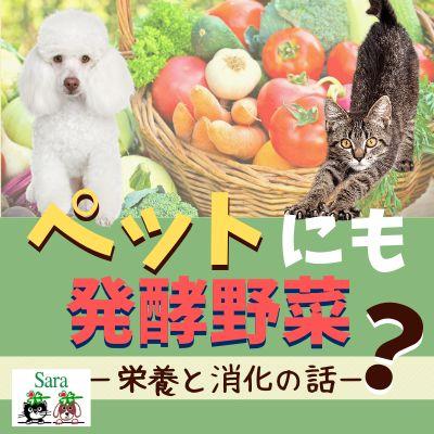 #84. ご質問への回答:ペットにも発酵野菜はいい?