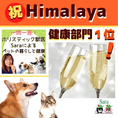 #89. 【応援企画】Himalayaランキングで健康部門:第1位獲得!多分〇〇の影響?