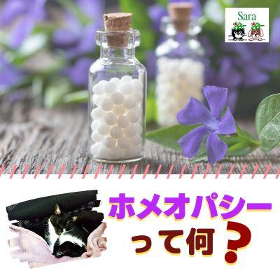 #91. 質問への回答:ホメオパシーは猫にもイイ?ジョバンニの体調も落ち着いてきてます^^