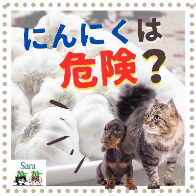 #94. よくある誤解:犬猫にニンニクを与えたらダメ!?