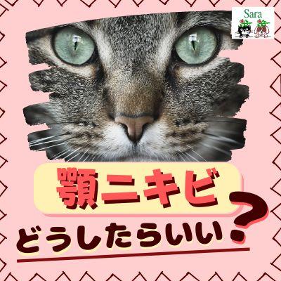 #96. なぜニキビができるの?猫の顎ニキビ:どうやってケアしたら良い?