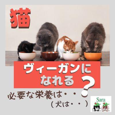 #119. 質問に回答:猫ちゃんはヴィーガンになれる?必要な栄養は?