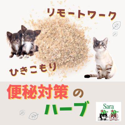 #121. 質問に回答:引きこもり&リモートワークで便秘?犬猫にオオバコはどのくらい与える?