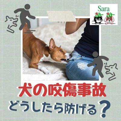 #344. なぜ犬の咬傷事件がなくならないのか?被害を減らすために必要なこと