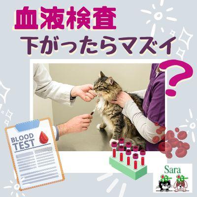 #345. 数値が下がっているのが良いとは限らない?知らないと損する!血液検査の基本(その1)