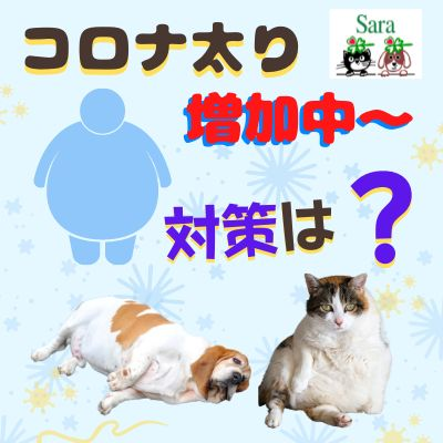 #346. コロナ太りでさらに病気に?太りやすい食事と太りにくい食事は・・