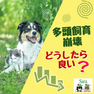 #363. 重要:多頭飼育崩壊を食い止めるには?(動物愛護週間)