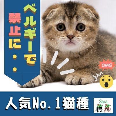 #367. イギリス・ベルギーで禁止に?日本で人気ナンバー1の猫種〇〇