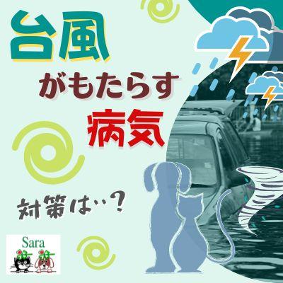 #369. 台風によってもたらされる病気とは?対策についても解説!