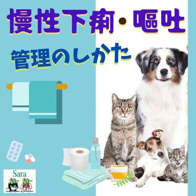#383. 慢性下痢・嘔吐の管理のしかた:ペットの介護のヒント