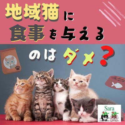 #385. 地域猫に食事をあげるのは良くない?(質問に回答)