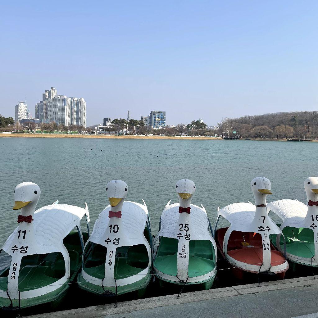 #61 韓国の地方都市紹介!☀大邱編👯