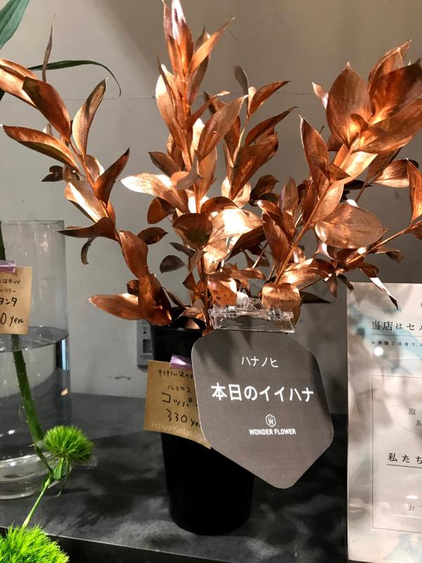 #064 日比谷花壇のサブスクが値上げするって!