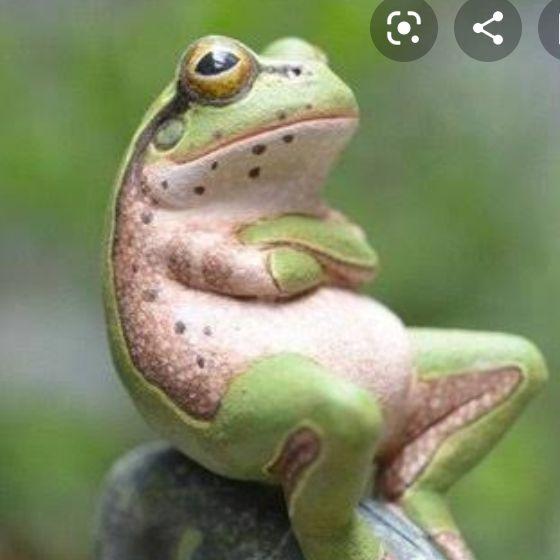 カエルの独り言