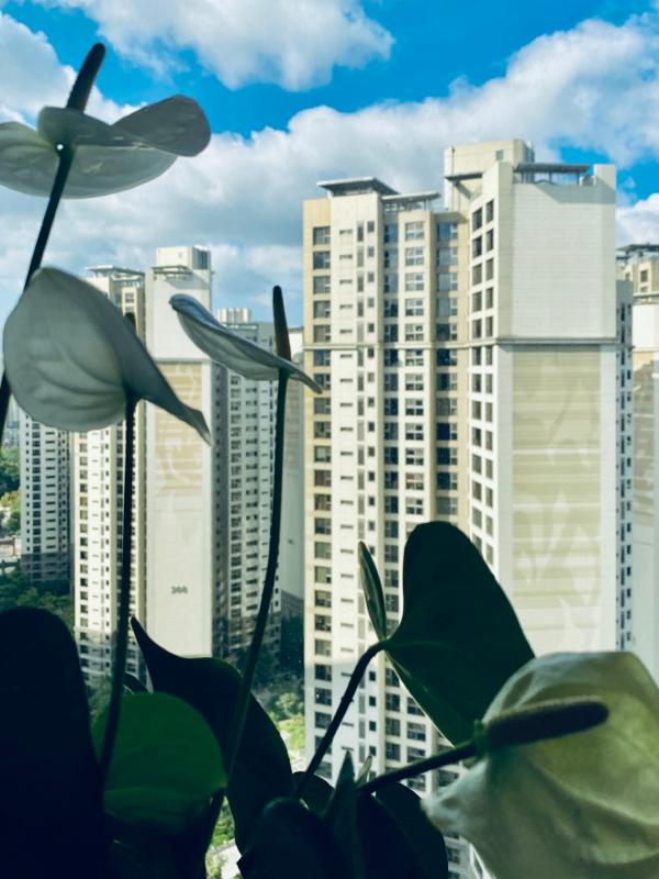 #16 ソウルのアパート、平均6000万円超え