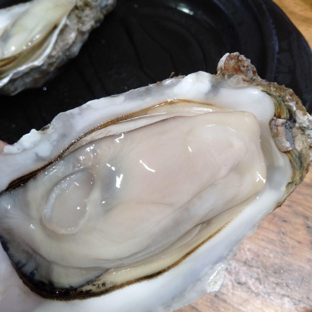 #14 牡蠣をたらふく食べたいなら厚岸の○○○に行こう!