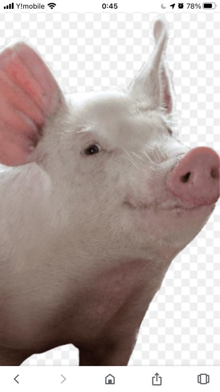 Laughter Zen a pig knows Karate