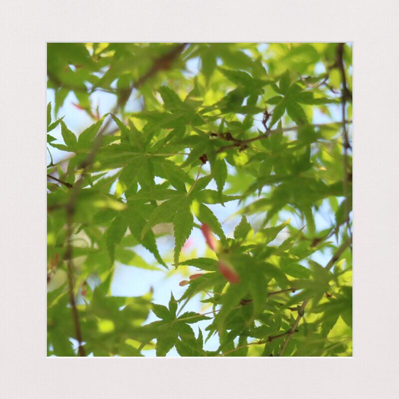 #129【朗読じかん】こころ 先生と遺書 九