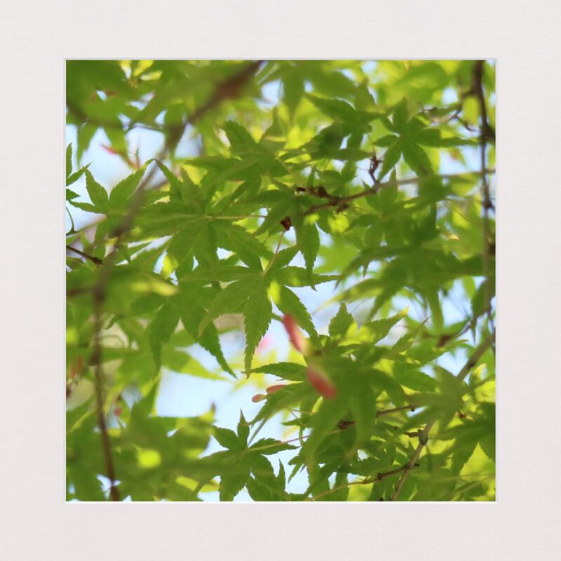 #140【朗読じかん】こころ 先生と遺書 十九