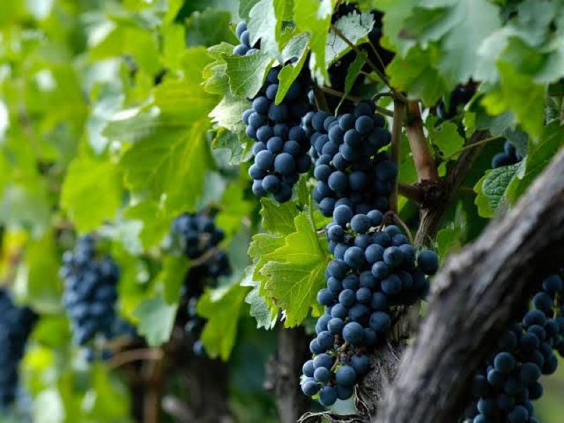 ワインの中でも健康的なワインって何?どれ??