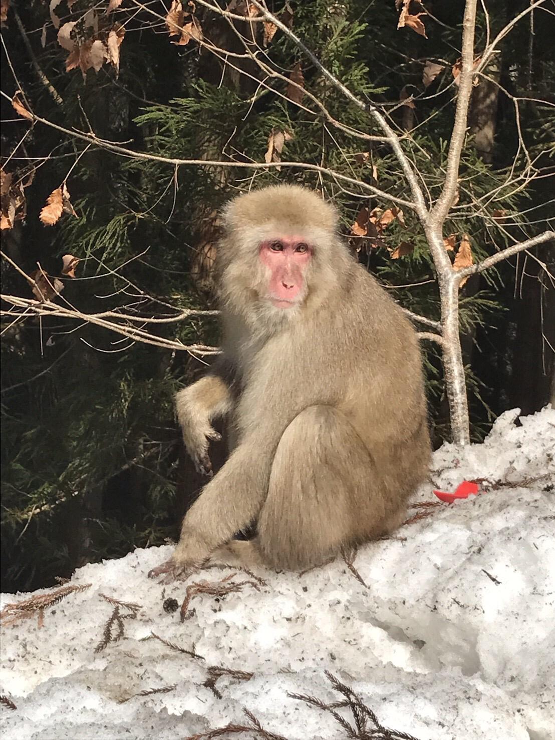 猿がなかやまきんに君を語る ヤァァァァァァァァア!!