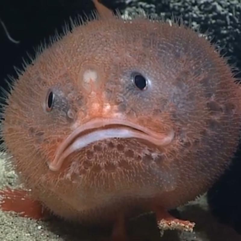 ♋️290:ダラダラ自分の雑な話/海底の私かもしれないフサアンコウ
