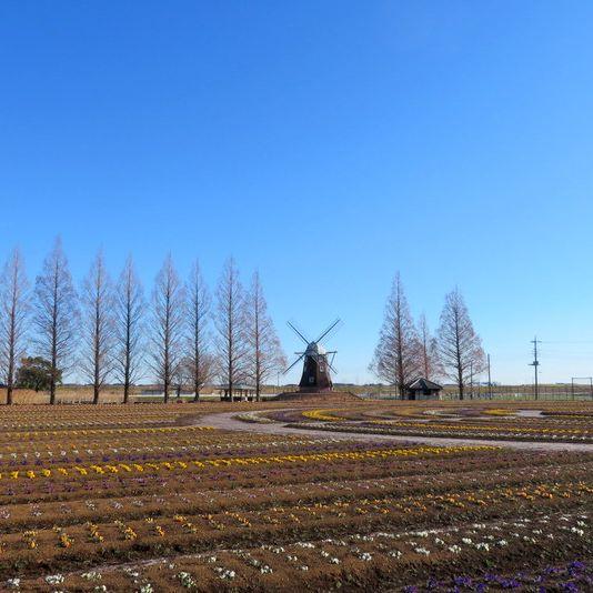 #43 梅が咲き始めたあけぼの山農業公園