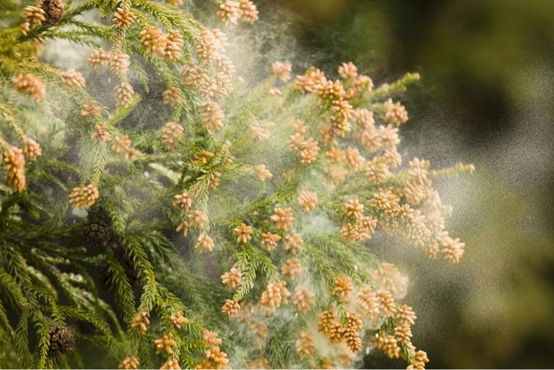 #26  花粉症と資格取得に向けて