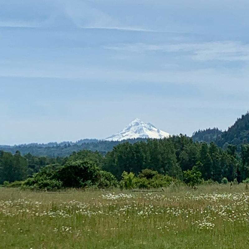 #83 山高きがゆえに尊からず 山樹あるがゆえに尊し by ココ