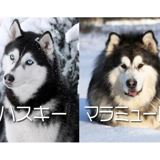 モヤっとする…。友達の犬の犬種が、違う気がするんだが。